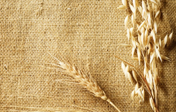 The Sheaf of Wheat